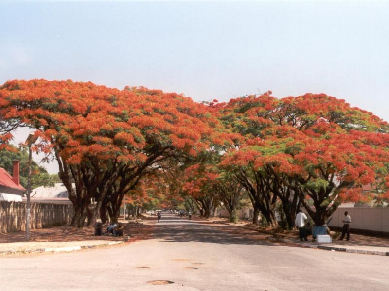 http://wsafrica.free.fr/images/pix/BM-Flamb9610006.jpg